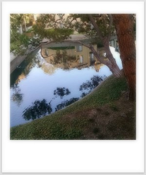 Pond reflections1